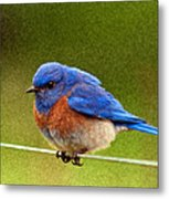 Bluebird  Painting Metal Print by Jean Noren
