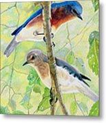 Bluebird Pair Metal Print
