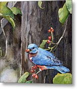 Bluebird - Red Berries Metal Print