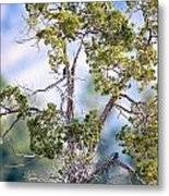 Bluebird Tree Metal Print