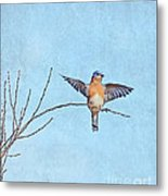 Bluebird Wings - Minimalism Metal Print