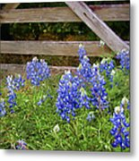 Bluebonnet Gate Metal Print