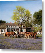 Bluebonnet Heaven Metal Print