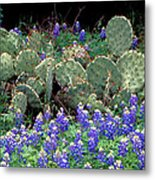 Bluebonnets And Cacti Metal Print