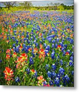 Bluebonnets And Prarie Fire Metal Print