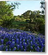 Bluebonnets By The Pond Metal Print