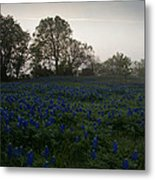 Bluebonnets On A Hazy Morning Metal Print
