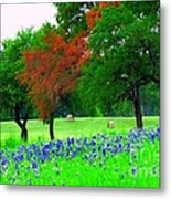 Bluebonnets With Red Flourish  Metal Print