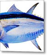 Bluefin Tuna Metal Print by Carey Chen