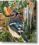 Bluejay And Ice Metal Print