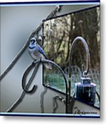Bluejay Oob - Featured In 'out Of Frame' And Comfortable Art Groups Metal Print