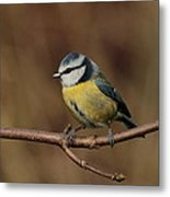 Bluey Metal Print by Peter Skelton