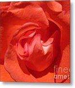Blushing Orange Rose 5 Metal Print