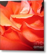 Blushing Orange Rose 6 Metal Print