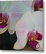 Blushing Orchids Metal Print