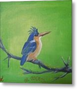 Blyth's King Fisher  Metal Print