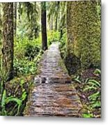 Boardwalk On The Rainforest Trail In Metal Print