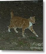 Bob-tail Cat Metal Print