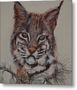 Bobcat Metal Print by Dorothy Campbell Therrien