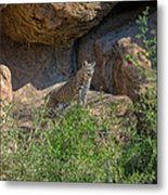 Bobcat Point Metal Print
