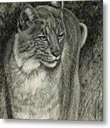 Bobcat Emerging Metal Print