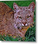 Bobcat Sedona Wilderness Metal Print