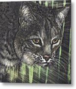 Bobcat Watching Metal Print