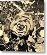 Boca Rose Metal Print