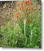 Bog Orchid Red Paintbrush On Mt A Metal Print by Dan A  Barker