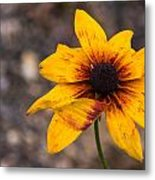 Bold Yellow Flower Metal Print