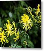 Bold Yellow Flowers Metal Print by Jason Brow