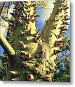 Bombacaceae - Floss Silk Tree - Chorisia Speciosa Hawaii Metal Print