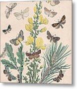 Bombycoidae - Acronyctidae - Orthosidae Metal Print