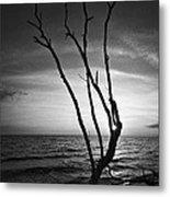 Bonita Beach Tree Black And White Metal Print
