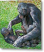 Bonobo Adult Playing With Baby Metal Print