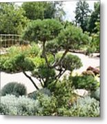 Bonsai In The Park Metal Print