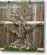 Bonsai Treet - Us Botanic Garden - 01136 Metal Print by DC Photographer