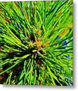 Bonzi Pine Metal Print