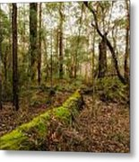 Boranup Forest - Western Australia Metal Print
