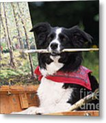 Border Collie At Painting Easel Metal Print