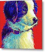Border Collie Puppy Metal Print