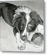 Border Collie Puppy Metal Print
