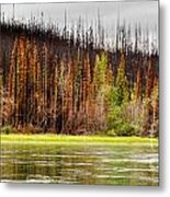 Boreal Forest At Yukon River Destroyed By Fire Metal Print