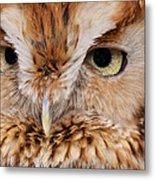 Boreal Owl Eyes  Metal Print