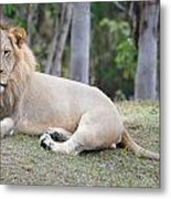 Bored Lion Metal Print