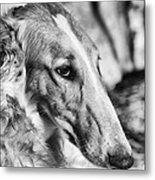 Borzoi Dog Portrait Metal Print by Christian Lagereek