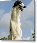 Borzoi Or Russian Wolfhound Metal Print