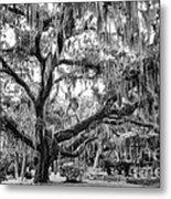 Bosque Bello Oak Metal Print