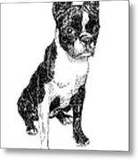 Boston Bull Terrier Metal Print