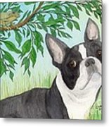 Boston Terrier Dog Tree Frog Cathy Peek Art Metal Print